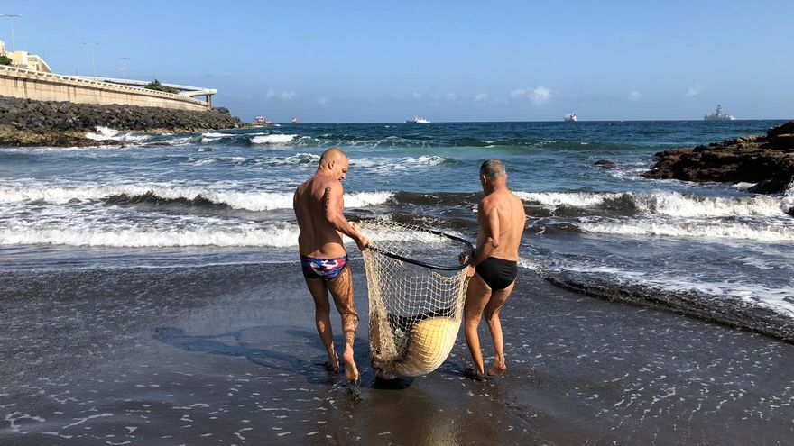 Una mantelina atrapada en las Piscinas de La Laja, rescatada y devuelta al mar
