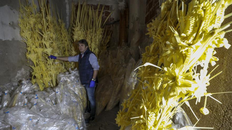 100.000 euros para ayudar al sector de la palma blanca