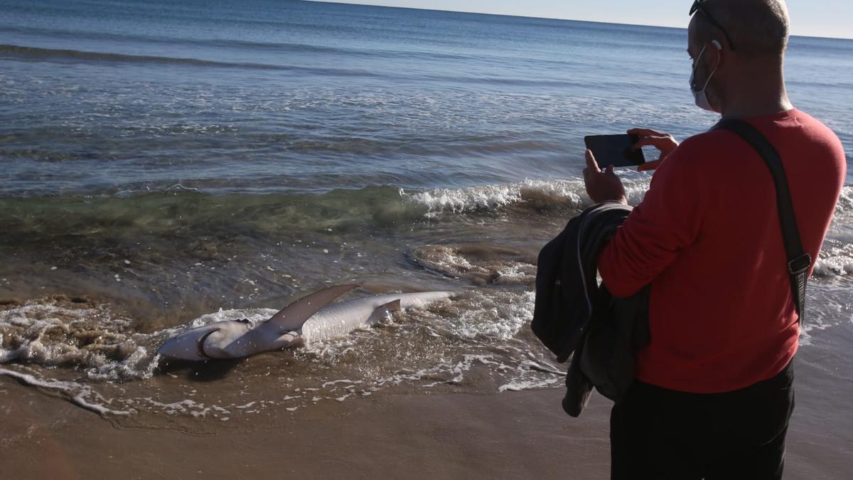 Una persona fotografiando el tiburón