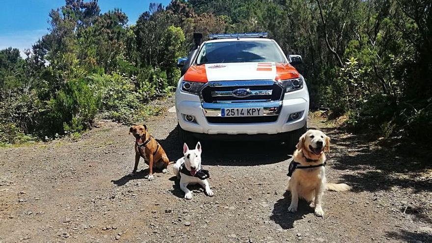 Protección Civil recupera su unidad canina con los perros Lola, Turko y Chela