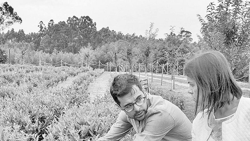 """""""El futuro está en el rural, hay alternativa al eucalipto"""""""