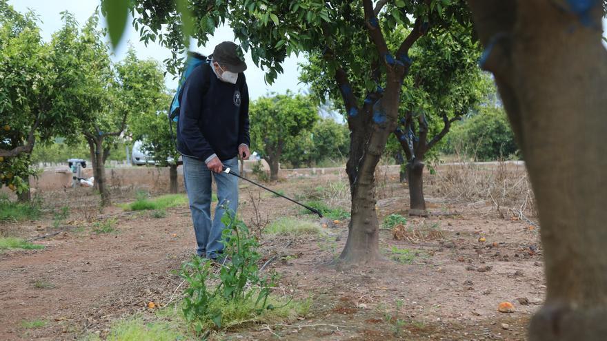 La Conselleria de Agricultura analizará el método alternativo contra el 'cotonet'