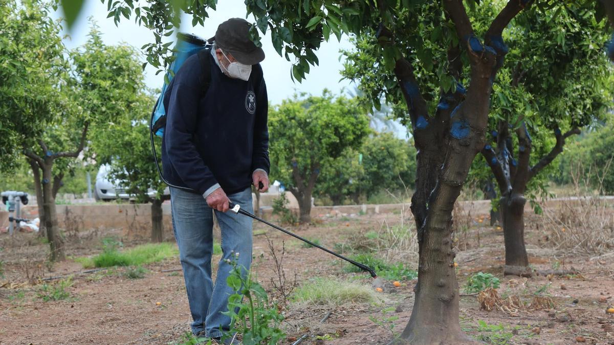 Aplicación del tratamiento alternativo contra el 'cotonet' en un campo de la provincia.