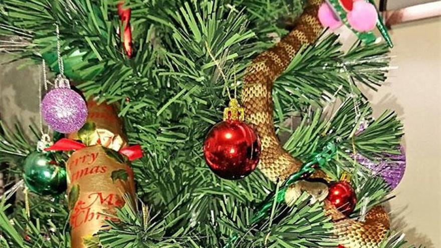 Una serpiente, entre los adornos del árbol de navidad