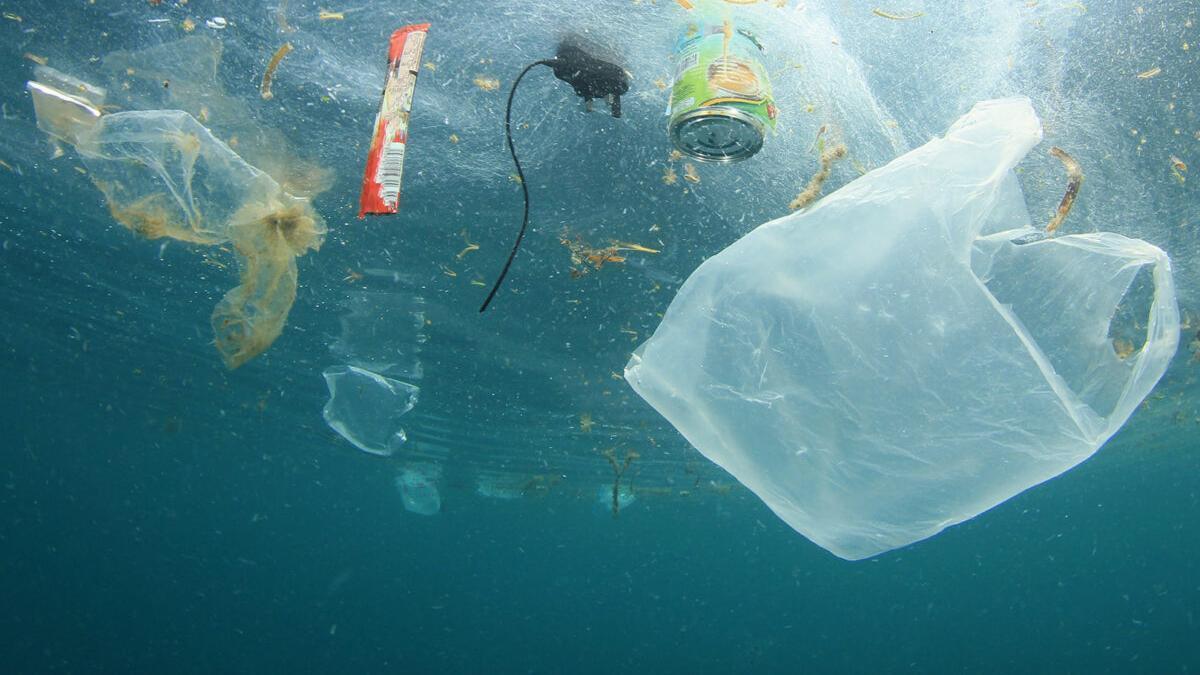 Día Mundial de los Océanos: ocho millones de toneladas de plástico al mar cada año