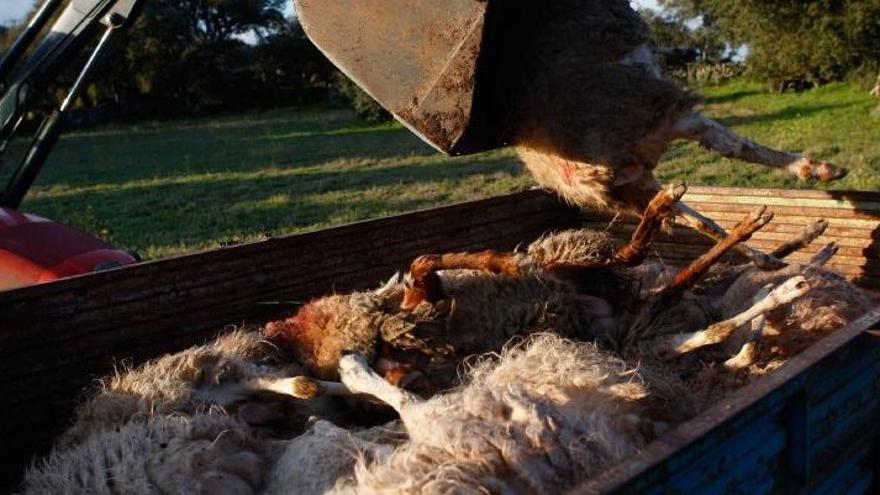 Más y más palos al mundo rural