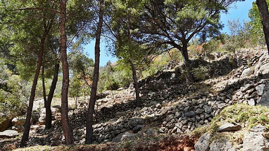 Crean fajas de protección en Deià y Valldemossa para disminuir el riesgo de incendios