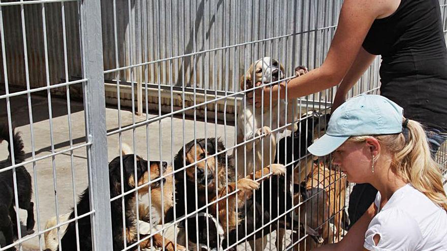 Los refugios podrán acoger hasta 600 perros y se apoyarán en protectoras