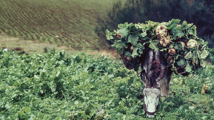 A vida lenta. Memoria e ritmos do rural galego