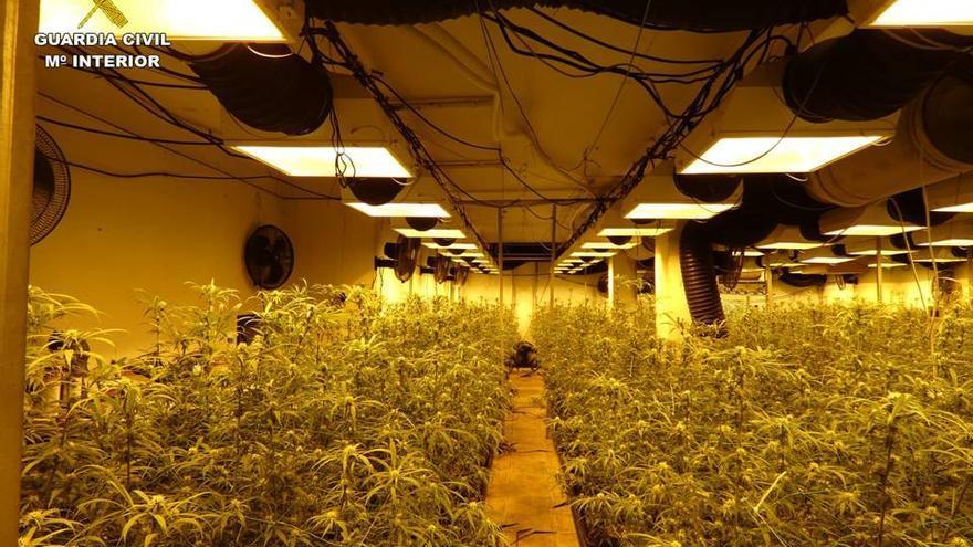 Descubren en un chalé de Pego un cultivo con 295 plantas de marihuana