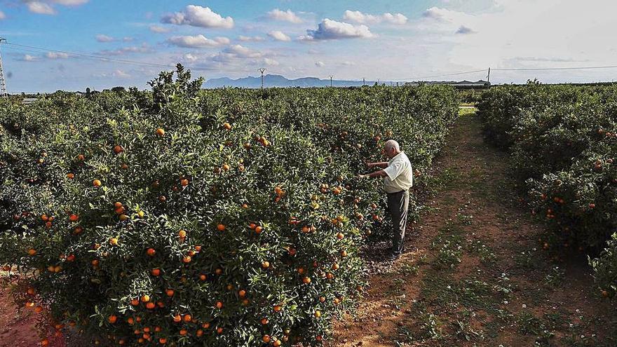 El precio de la tierra citrícola crece en Murcia y Andalucía y se estanca en la Comunitat Valenciana