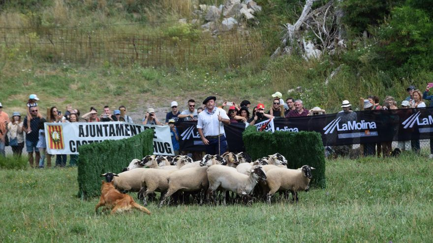 Segon any consecutiu sense el Concurs de Gossos d'Atura de Castellar de n'Hug