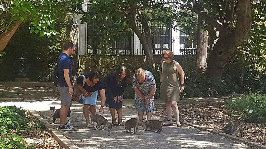 El ayuntamiento se marca como meta esterilizar al 90% de los gatos callejeros