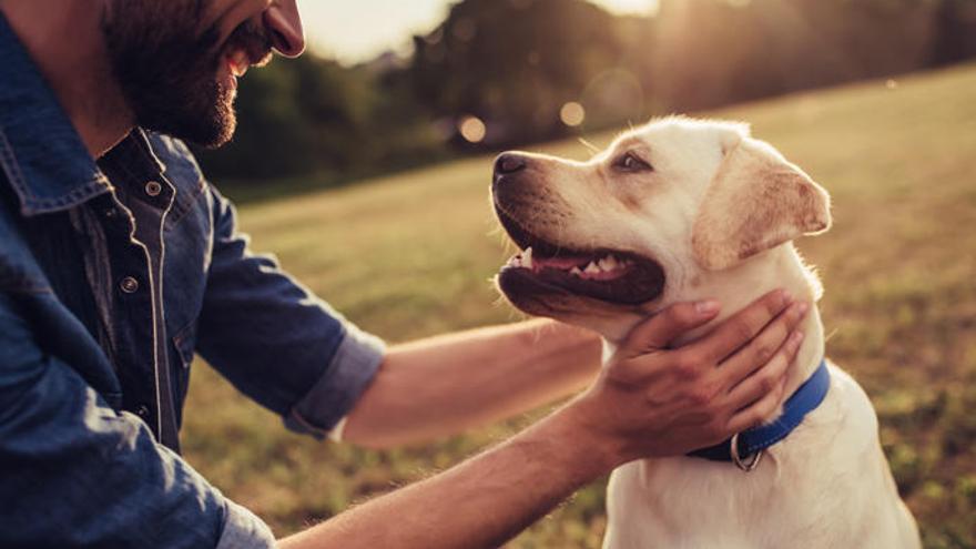 La Eurocámara pide medidas para acabar con el comercio ilegal de mascotas