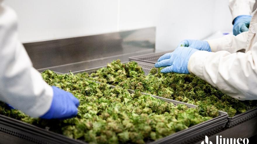 Nueva York se acerca a la legalización de la marihuana con fines recreativos