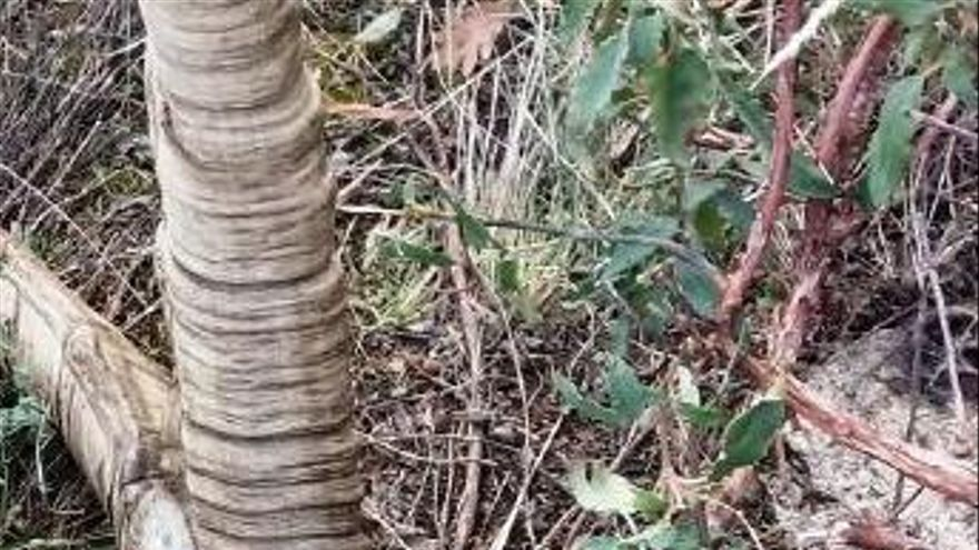 Ávila: Dos detenidos por cazar ilegalmente un macho montés en la Sierra de Gredos
