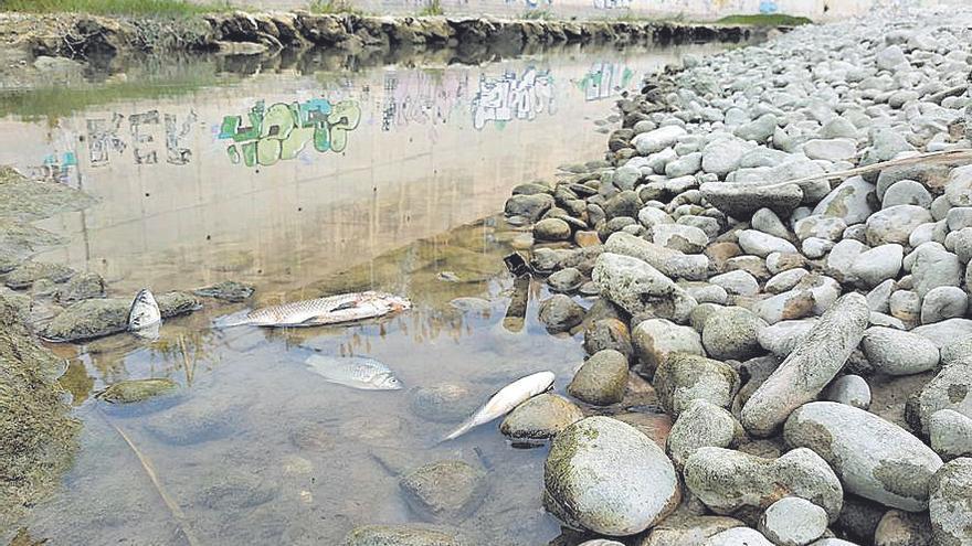 El Serpis, un río con caudal de ida y vuelta