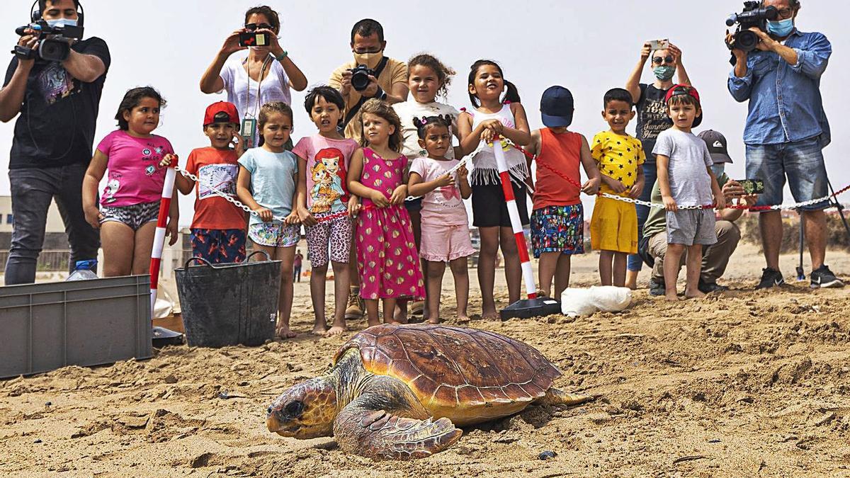 Liberadas  dos tortugas   GABRIEL FUSELLI