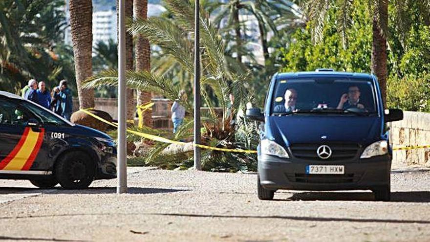 Muere una mujer al caerle encima una palmera derribada por el viento