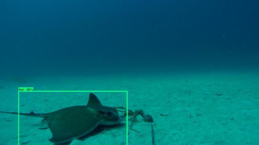 Mallorca-Forscher entwickeln Software zur Erkennung von Fischarten