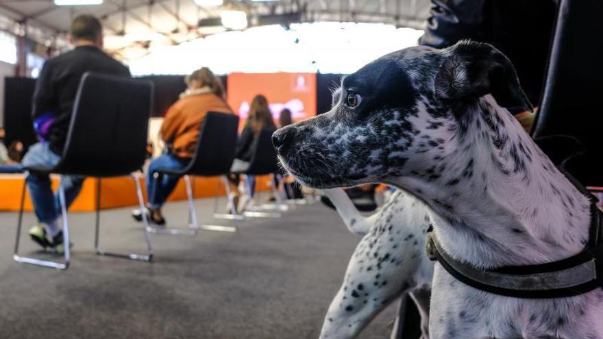 Animundo desmonta el mito de los perros potencialmente peligrosos
