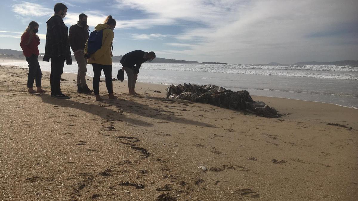 Los curiosos observan el trozo de esqueleto depositado por el mar en la costa meca.