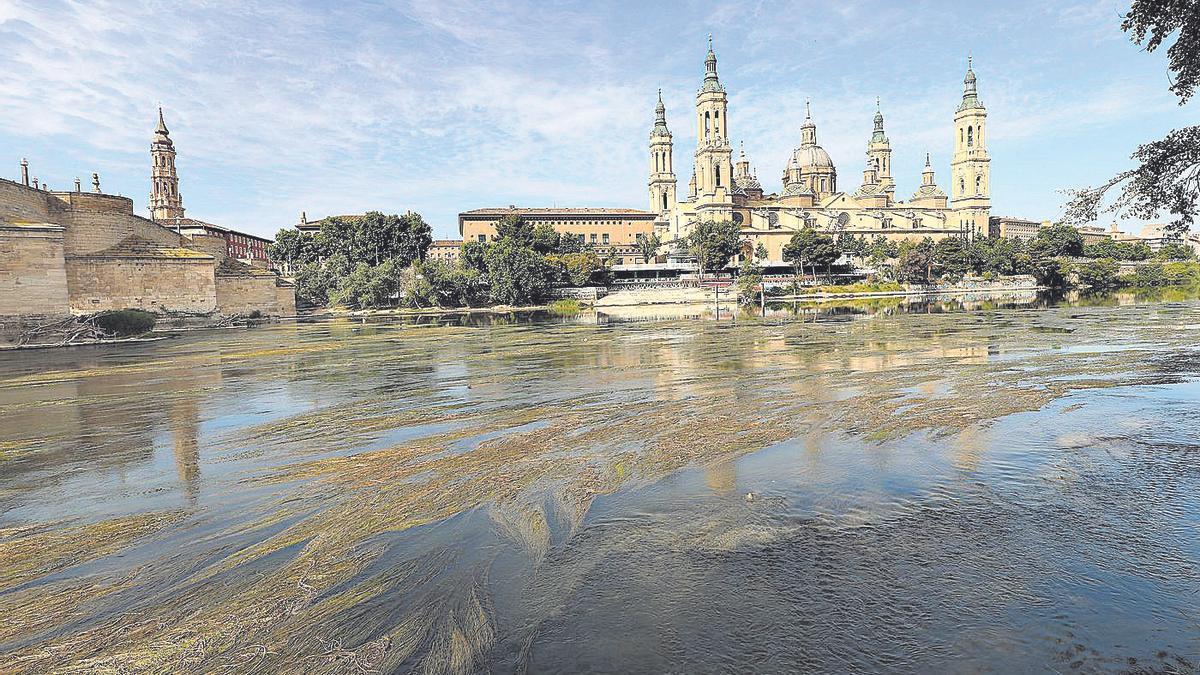 Las algas cubre gran parte del caudal del Ebro, a su paso por Zaragoza.