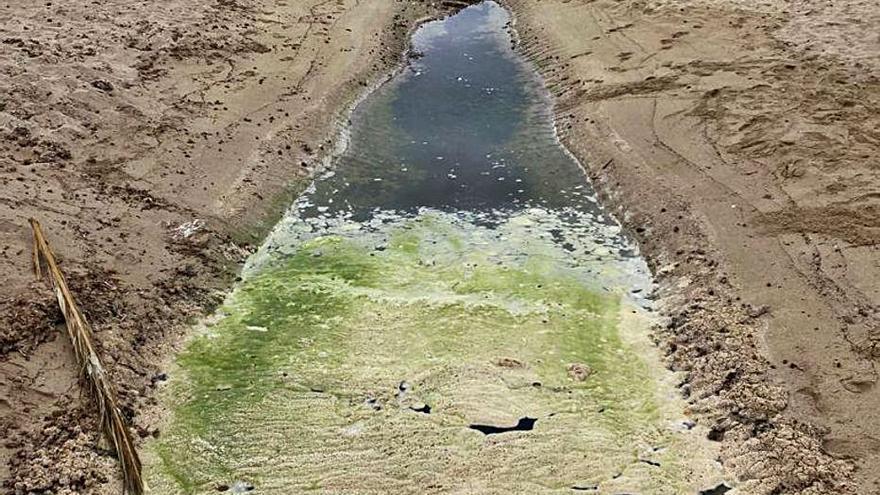 Pollença tapa con arena la acumulación de aguas sucias en una playa del Moll