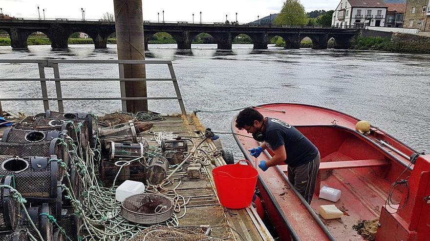 Los valeiros esperan un buen año de lamprea en el Ulla