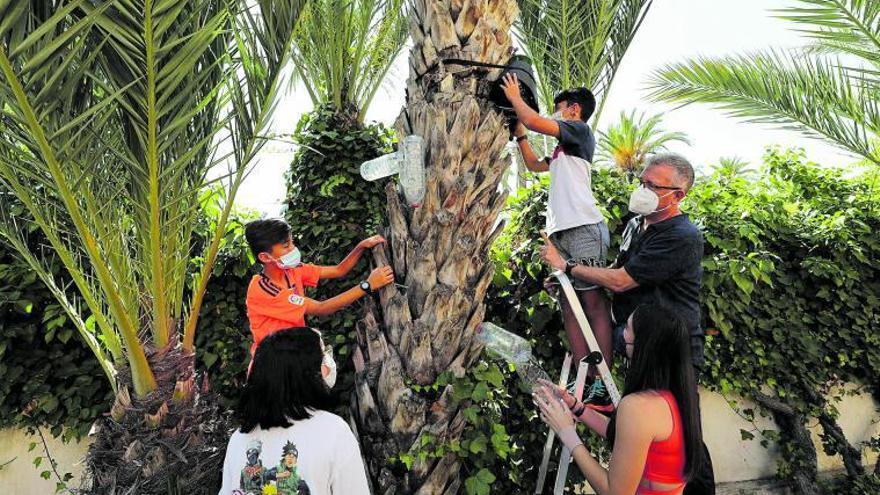 Alumnos del IES La Asunción experimentan con un hongo capaz de destruir el picudo