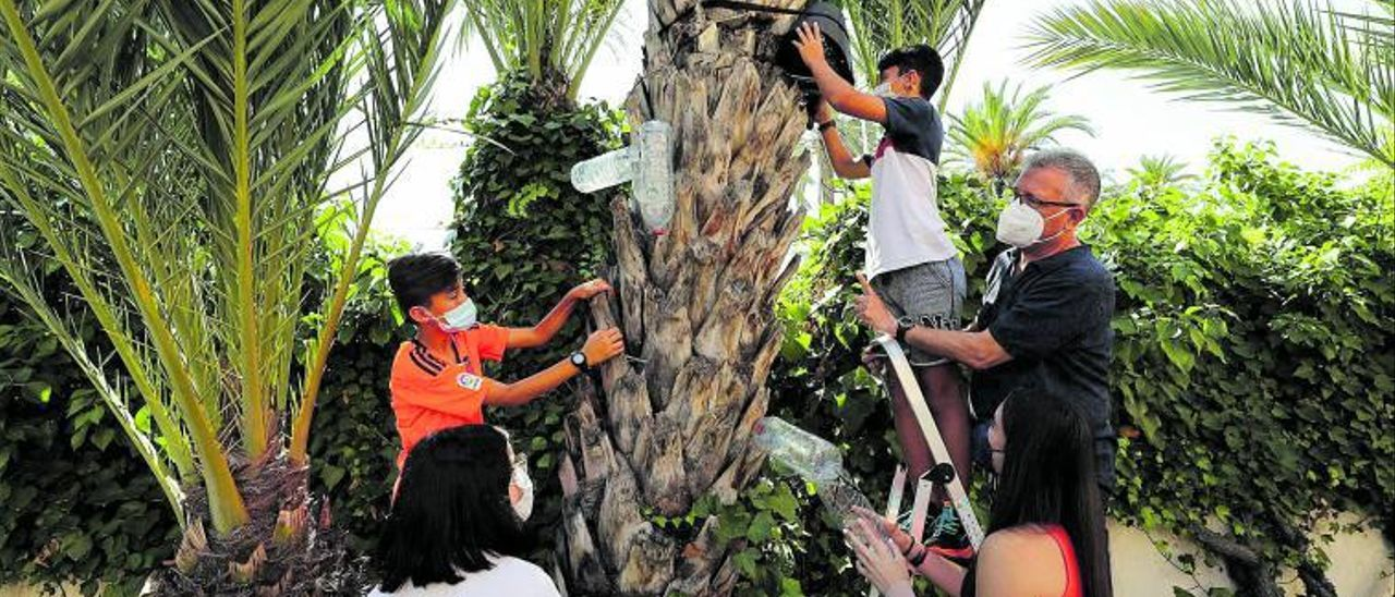 Los alumnos del IES La Asunción, acompañados de su profesor, con trampas para cazar picudos en las palmeras. |
