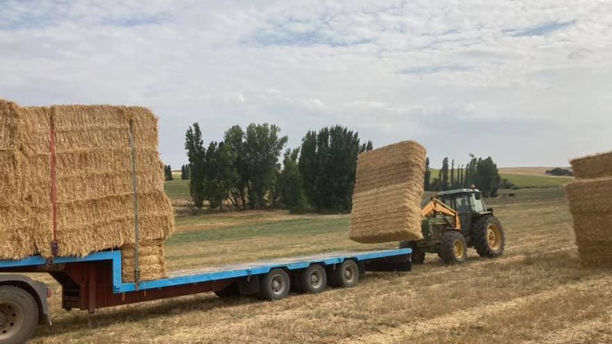 Fuentesaúco envía ayuda en forma de paja a los ganaderos afectados por el incendio de Ávila