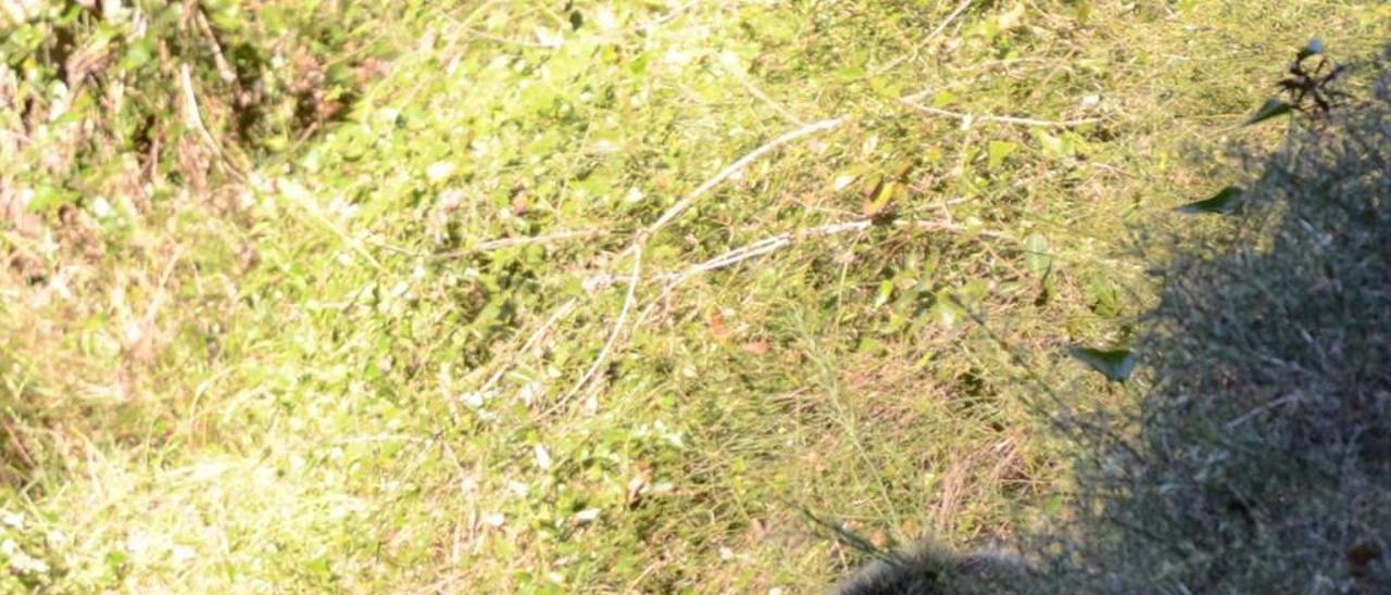 Los avistamientos de osos lo confirman: las Cuencas son clave para su expansión