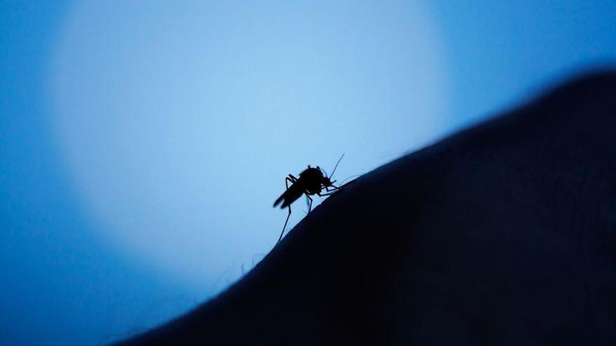 El remedio infalible para curar las picaduras de mosquito