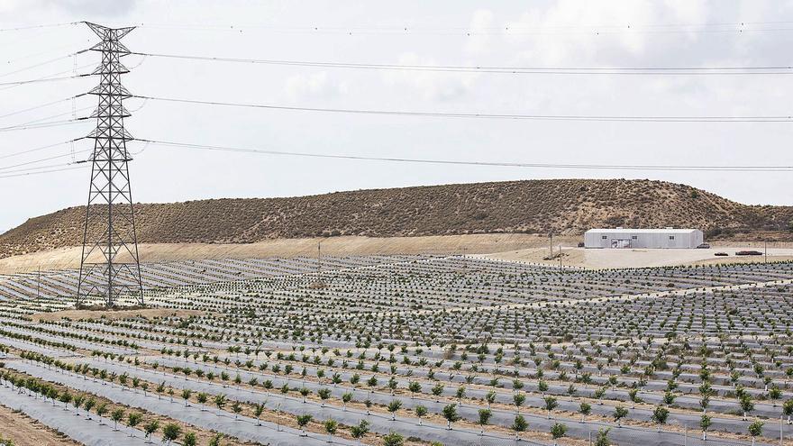 Plantan miles de limoneros donde se proyectaba una macrourbanización con golf entre Xixona y Mutxamel