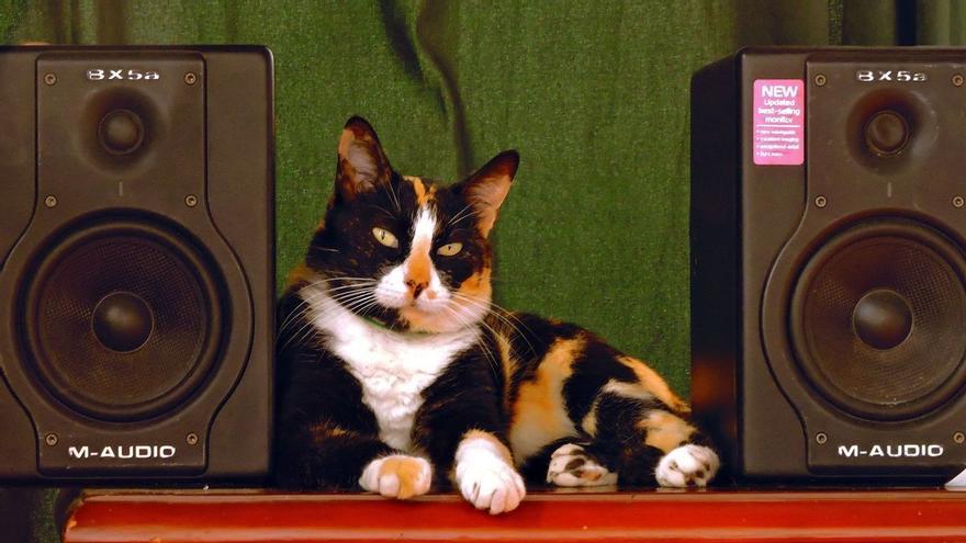 El gato DJ: vecinos denuncian música alta en una casa de Lugo donde solo había un felino