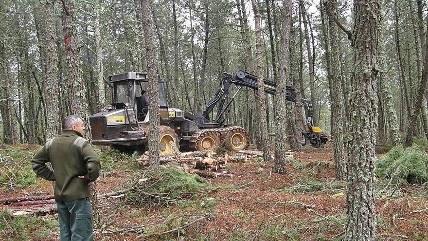 Las subastas de madera generan cinco millones de ingresos a municipios de Zamora