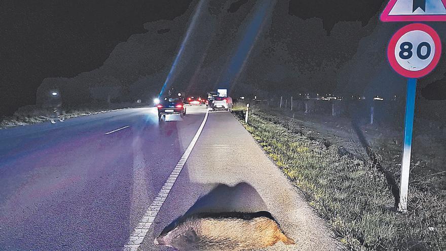 Dos accidents en poques hores amb ferits per l'atropellament d'un porc senglar