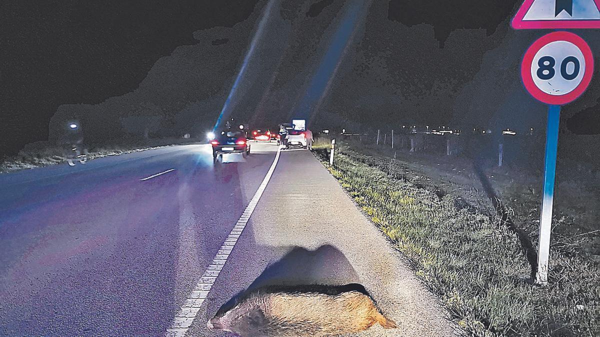 Un accident causat per un senglar a les comarques de Girona i l'animal mort al voral, arxiu.    MOSSOS
