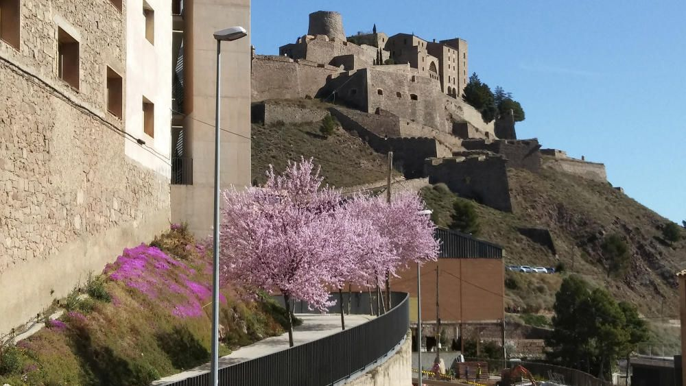 Florits. Aquests dies la primavera ja es fa evident. En aquesta bonica imatge veiem els arbres florits a Cardona.
