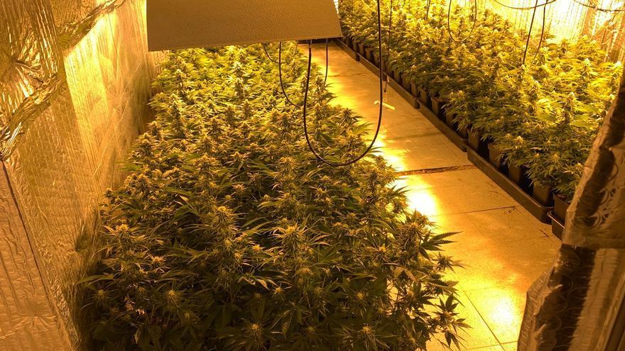Filtros de carbono para ocultar el olor de 218 plantas de marihuana