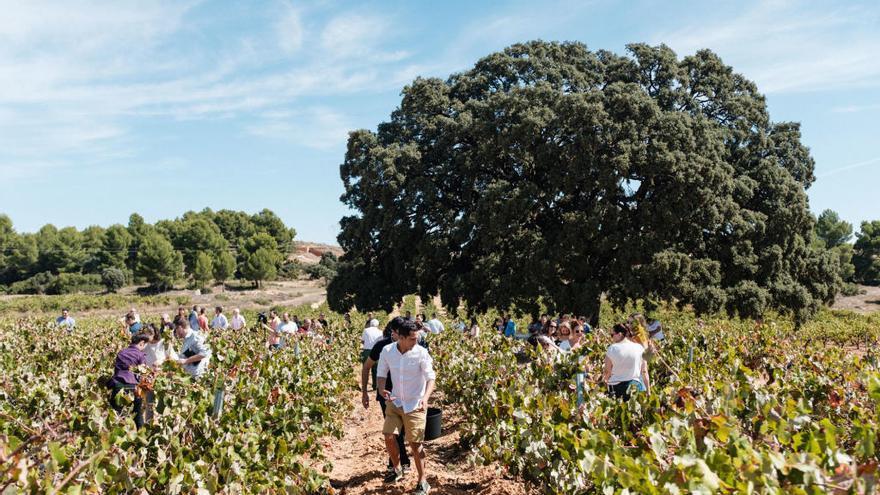 El origen de los mejores vinos de Bodegas Nodus