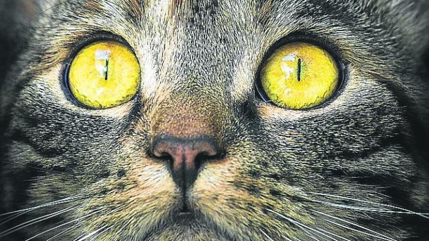 Mi gato me pone 'ojitos' de hambre