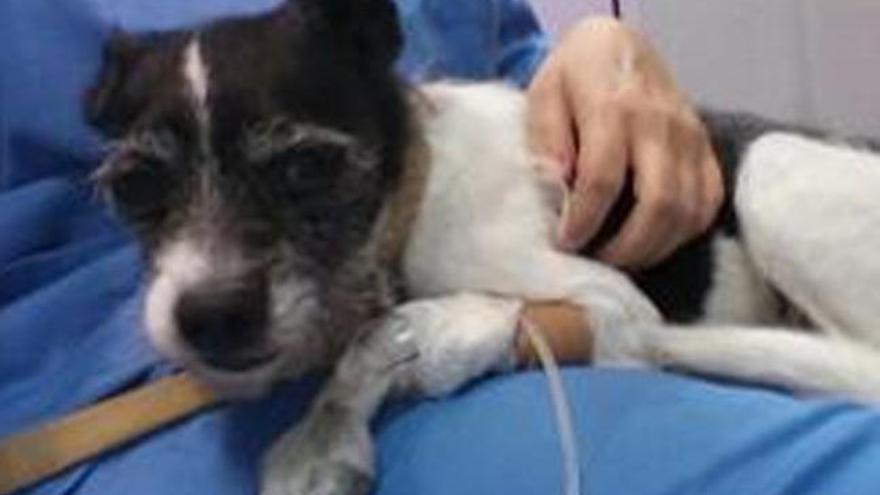 Multa por no llevar a su perra al veterinario pese a su mal estado