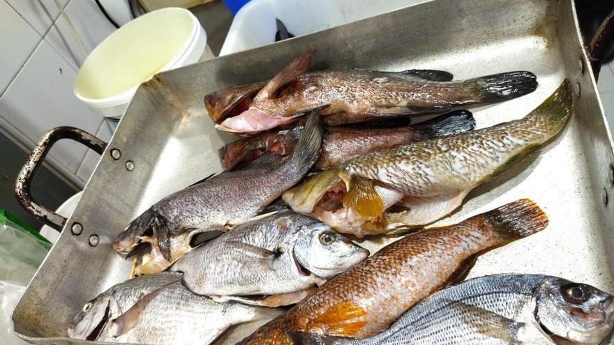 El Govern denuncia a un restaurante de Palma por tener pescado arponado