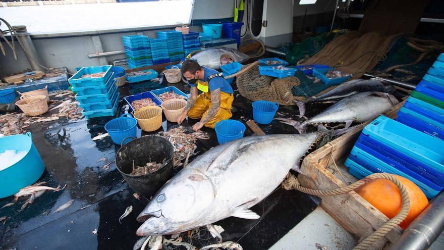 Un pescador de La Vila no sabe qué hacer con 8 atunes capturados por error en Ibiza