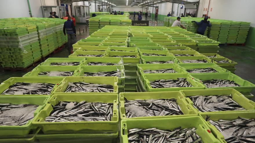 Las rulas asturianas batieron en marzo el récord histórico de venta de pescado