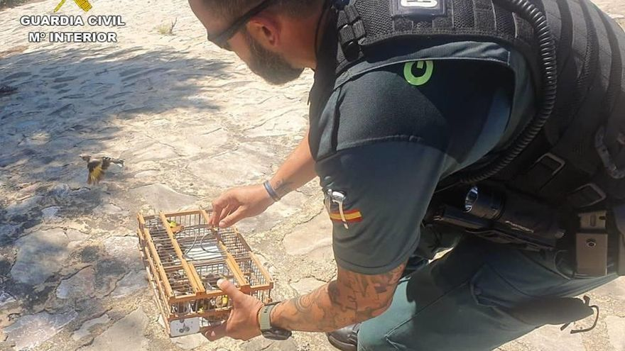 La Guardia Civil interviene casi una treintena de jilgueros capturados