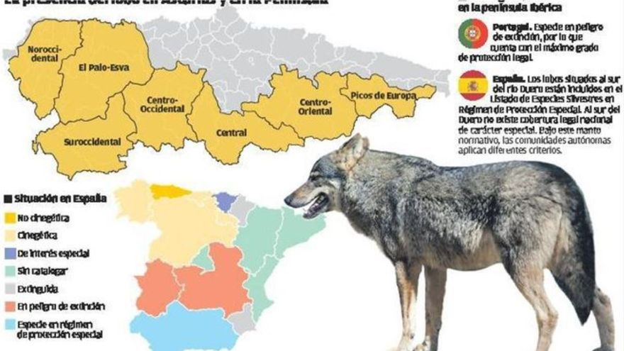 """""""El lobo debe protegerse en toda España, como recomiendan los científicos"""""""