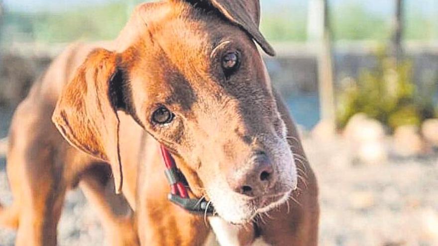 La acusación popular y los delitos de maltrato animal y abandono